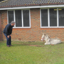 Transit-van travelling Donkey Secures Future with World Horse Welfare